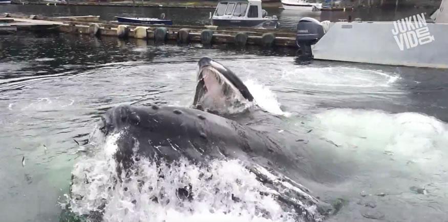 ballenas-alaska