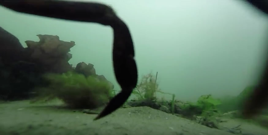 pesca-gopro1