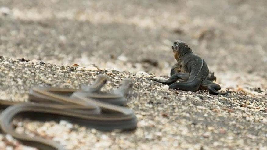 iguana-serpientes1