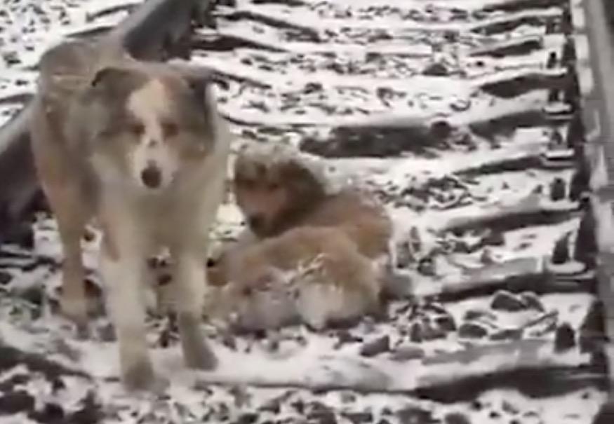 perro-panda1
