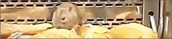ratas-granier-t