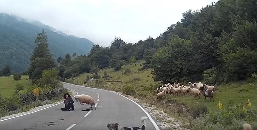 ataque-oveja1