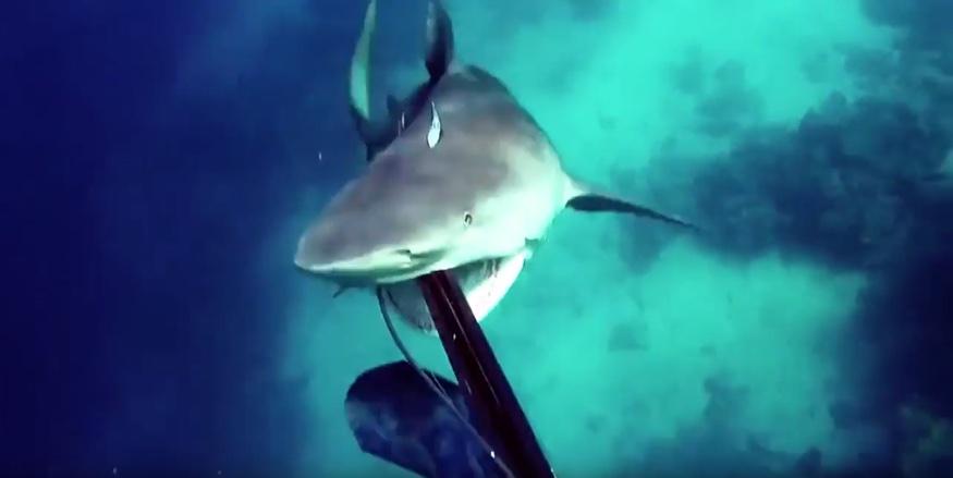 tiburon-ataca1