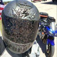Lo malo de los paseos en moto en Verano